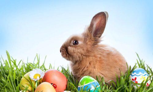 Easter Bunny at Chevron Renaissance Shopping Centre